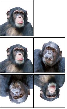 図1 トップのモデルのチンパンジーは、<br/ >中段の正立の場合は他個体との識別は<br/ >簡単だが、下段の倒立になると<br/ >他個体との識別がしにくくなる