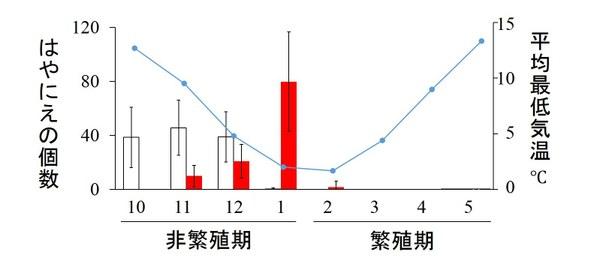 図2 モズのはやにえの生産量と消費量の季節変化と気温の関係。横軸の数値ははやにえ調査を行った月を表す。白の棒グラフははやにえの生産数(平均値±SD)、赤の棒グラフははやにえの消費数、青の折れ線は最低気温の平均値を表す。