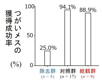図6 実験群ごとの、つがいメスの獲得成功率。%の値が大きい群ほど、多くのオスがメス獲得に成功したことを意味する。例えば、除去群の25%は、除去群の8個体中2個体のオスがメス獲得できたことを意味する。