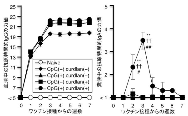 図1:ワクチン接種後の抗原特異的な血清中のIgG ※5 とIgAの推移