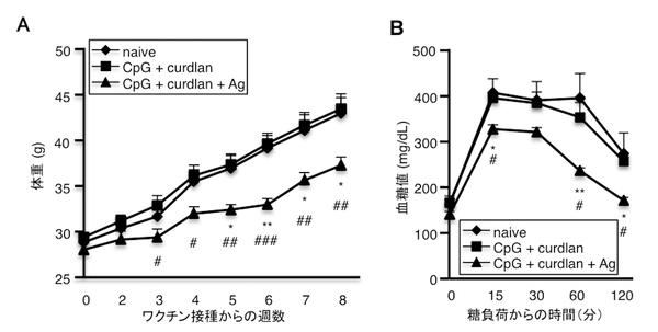 図3:肥満者の糞便を移植したノトバイオートマウスにC. ramosumに特異的なワクチンを接種すると高脂肪食で誘導される肥満や糖尿病は抑制される<br / > (A) 経時的な体重変化を示す<br / > (B) 経口糖負荷試験による血糖値の推移を示す