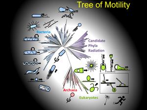 運動能の全体像:中央の鳥が翼を広げたような図が最新のゲノム情報を基に描かれた「生命の系統樹」。周囲に代表的な運動能の模式図が示してある。