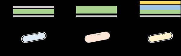 図1 代表的な微生物の細胞表層の構造<br/> 大腸菌などのグラム陰性菌の細胞には、内膜と外膜があり、その間に薄い細胞壁を有している。枯草菌などのグラム陽性菌は、細胞膜の外側に厚い細胞壁を有している。ミコール酸含有細菌は、グラム陽性菌と同様に厚い細胞壁を有し、さらにその外側にミコール酸を主成分とする外膜構造がある。